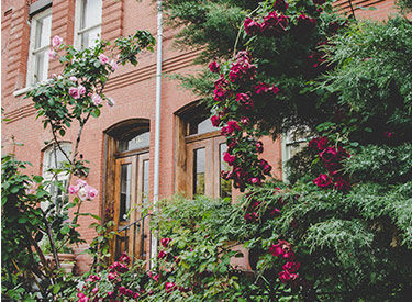 Red brick houses with flowers and bushes at the front